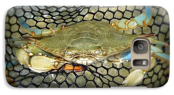 Galaxy Case featuring the photograph Blue Crab by Kelly Nowak