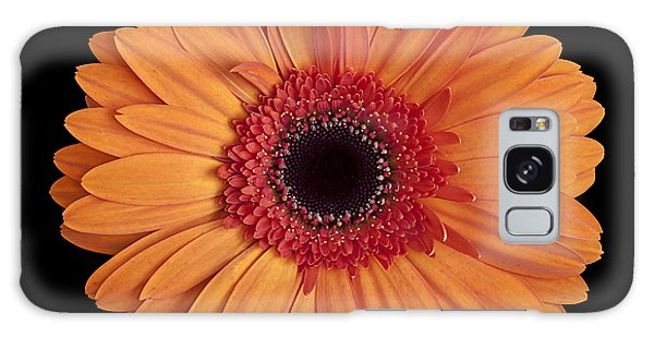 Orange Gerbera Daisy On Black Galaxy Case