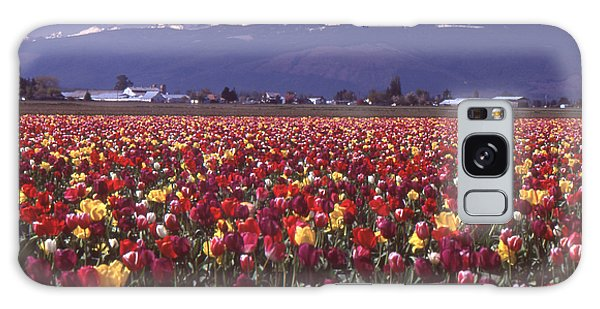 Field Of Tulips And Mount Baker Galaxy Case by Ansel Price