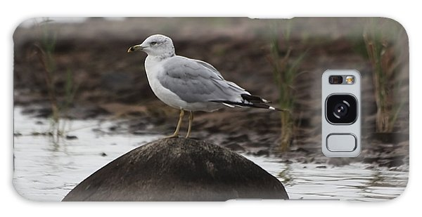 Gull On A Rock Galaxy Case