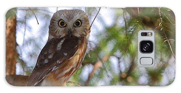 Saw-whet Owl Galaxy Case