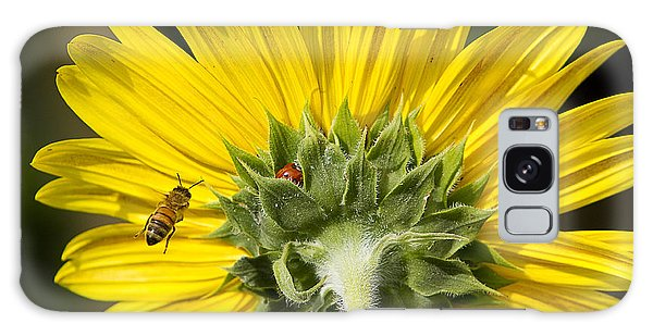 The Bee Lady Bug And Sunflower Galaxy Case