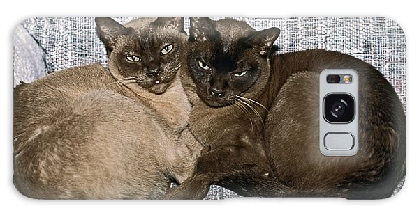 Tonkinese Pals Galaxy Case by Sally Weigand