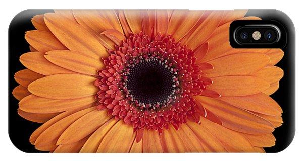Orange Gerbera Daisy On Black IPhone Case