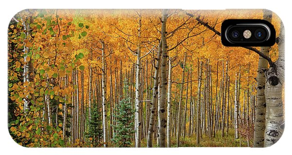Aspens Aglow  IPhone Case