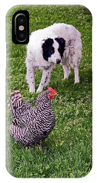Border Collie Herding Chicken IPhone Case