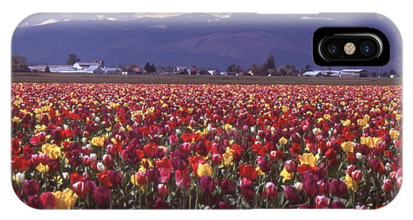 Field Of Tulips And Mount Baker IPhone Case