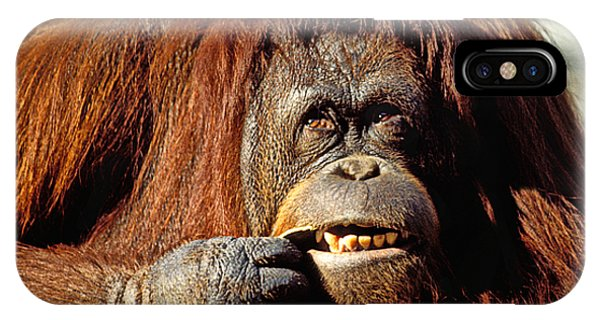 Orangutan  IPhone Case