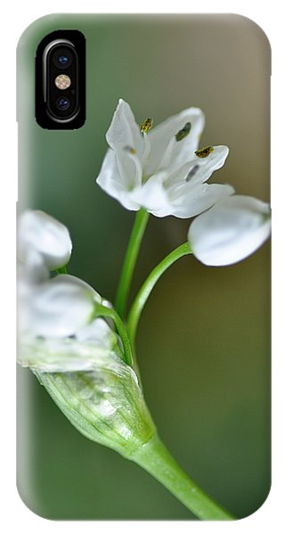 White Blossom 3 IPhone Case