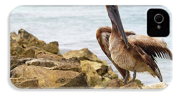 Brown Pelican IPhone 4s Case by Sebastian Musial