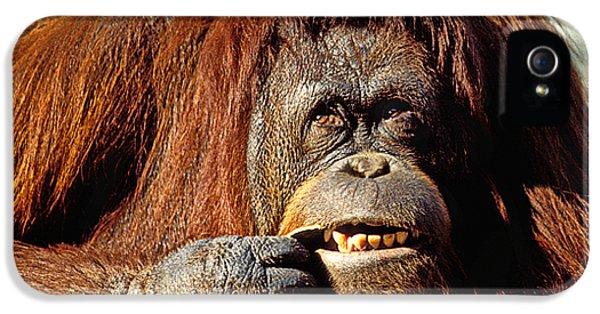 Orangutan  IPhone 5 Case