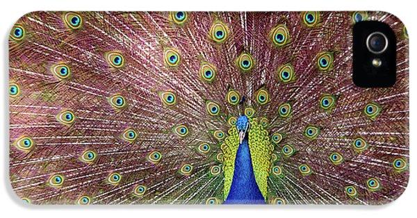 Peacock IPhone 5 Case by Carlos Caetano