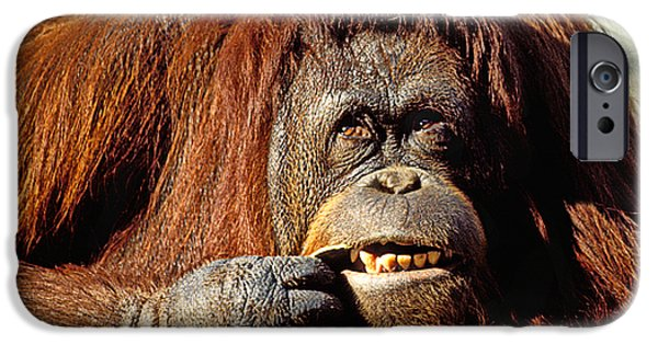 Orangutan  IPhone 6s Case