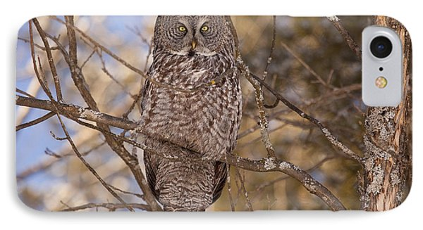 Being Observed IPhone Case by Eunice Gibb