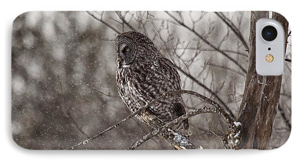 Contemplating Winter IPhone Case by Eunice Gibb