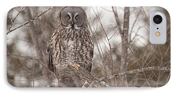 Great Grey Owl IPhone Case by Eunice Gibb