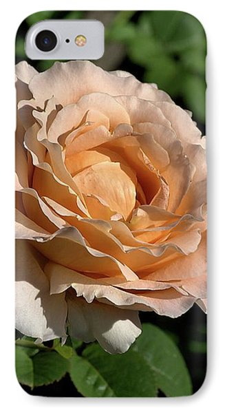 IPhone Case featuring the photograph Orange Rose by Joy Watson
