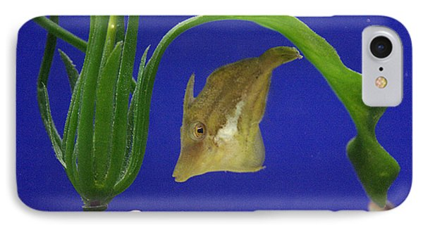 Sharpnose Puffer Fish Phone Case by Chris Martin-bahr