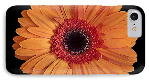 Orange Gerbera Daisy On Black IPhone Case