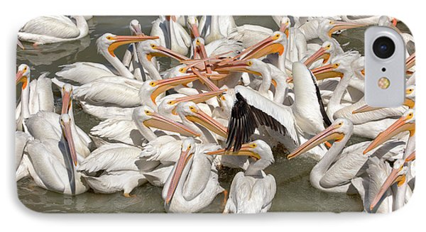 American White Pelicans IPhone Case by Eunice Gibb