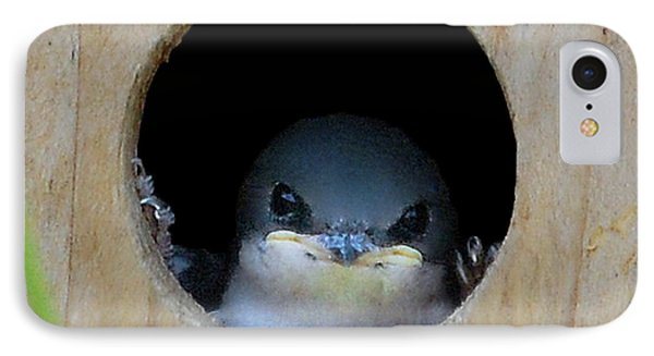 Barn Swallow Chick IPhone Case by DigiArt Diaries by Vicky B Fuller