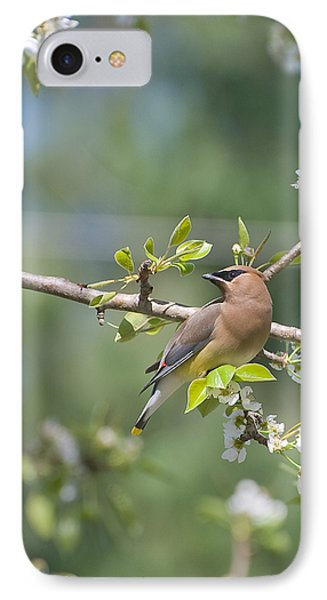 IPhone Case featuring the photograph Cedar Waxwing by Margaret Palmer