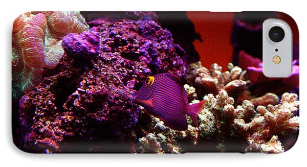 Colors Of Underwater Life IPhone Case by Clayton Bruster