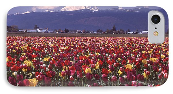 Field Of Tulips And Mount Baker IPhone Case by Ansel Price