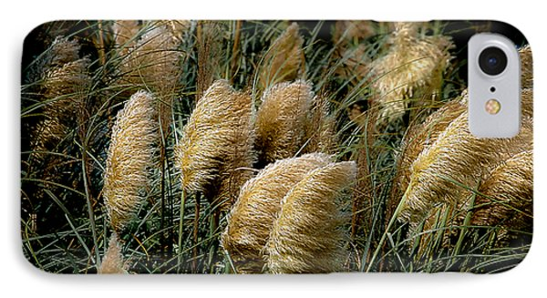 Golden Pampas In The Wind IPhone Case by DigiArt Diaries by Vicky B Fuller