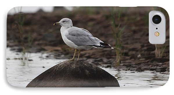 Gull On A Rock IPhone Case