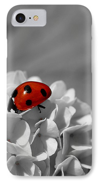 Lady Bug Sc IPhone Case by Martina Fagan