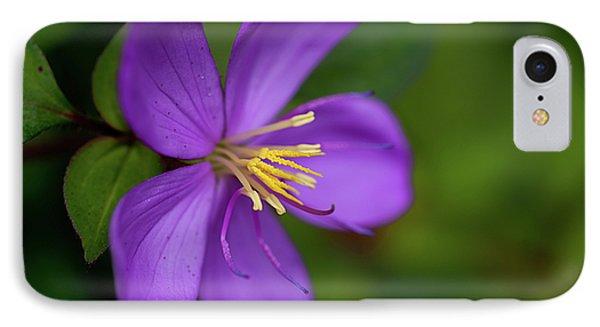 Purple Flower Macro IPhone Case by Dan McManus