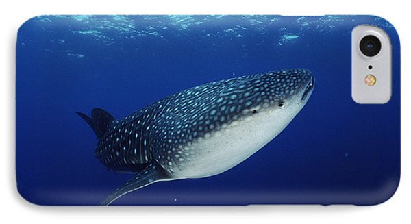 Whale Shark Rhincodon Typus Phone Case by Jurgen Freund