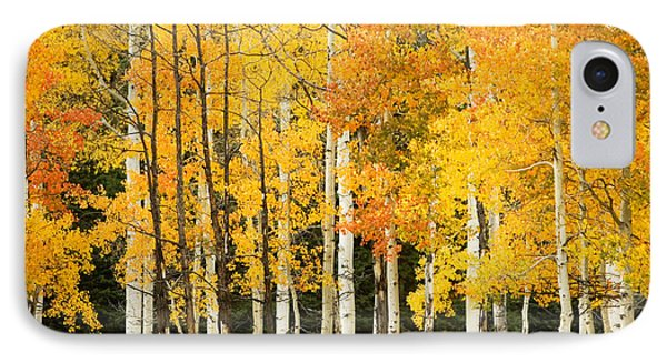White Aspen Trunks IPhone Case by Ron Dahlquist - Printscapes