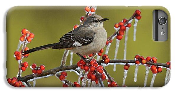 Mockingbird iPhone 7 Plus Case - Northern Mockingbird (mimus Polyglottos by Rolf Nussbaumer