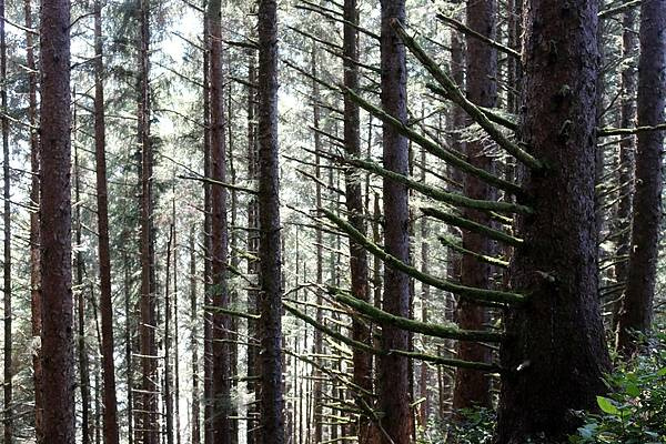Photograph - In The Woods  by Christy Pooschke