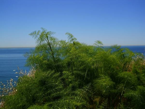 Wall Art - Photograph - Maidenhair Ferns By The Sea by Eve Paludan