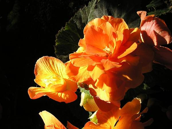 Wall Art - Photograph - Orange Flowers At Sunset by Eve Paludan
