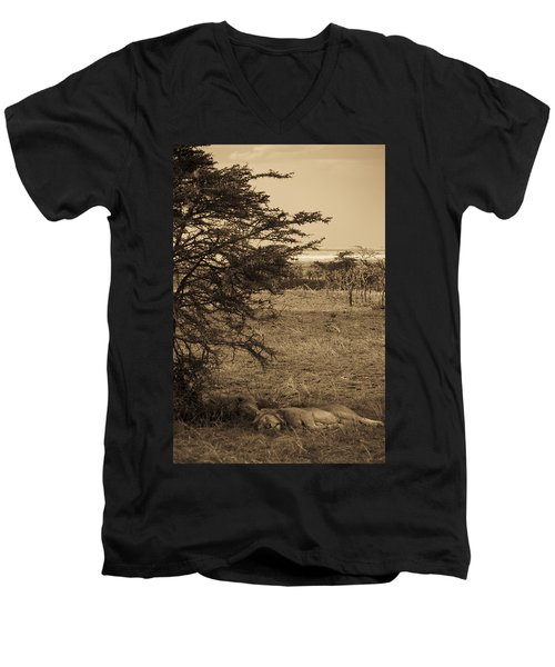 Male Lions Snoozing In Shade Men's V-Neck T-Shirt by Darcy Michaelchuk