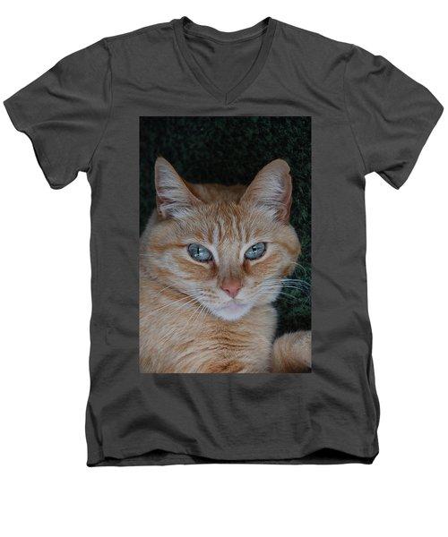 Fat Cats Of Ballard 5 Men's V-Neck T-Shirt