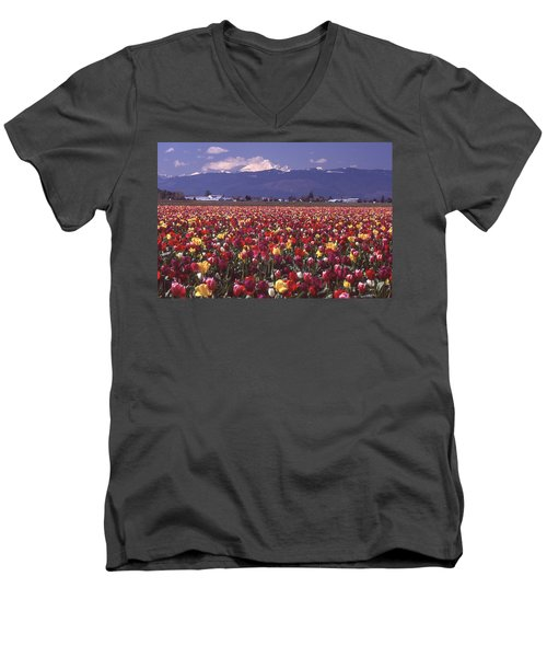 Field Of Tulips And Mount Baker Men's V-Neck T-Shirt