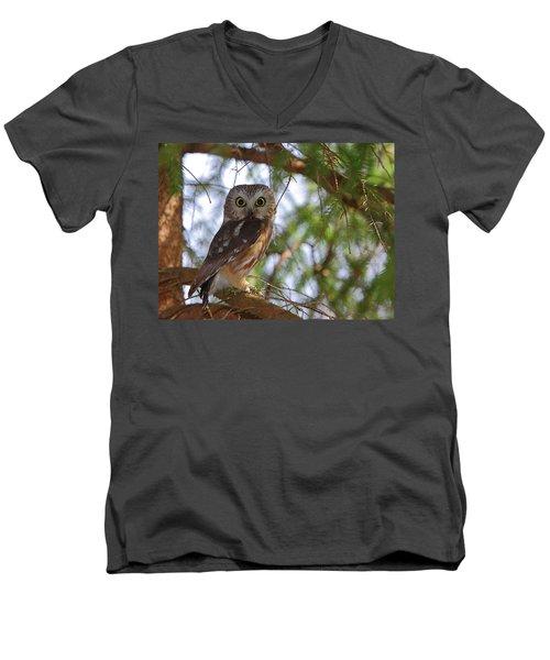 Saw-whet Owl Men's V-Neck T-Shirt