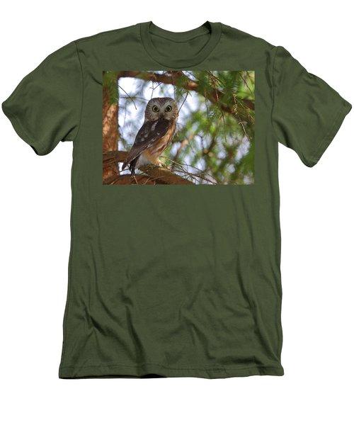 Saw-whet Owl Men's T-Shirt (Athletic Fit)