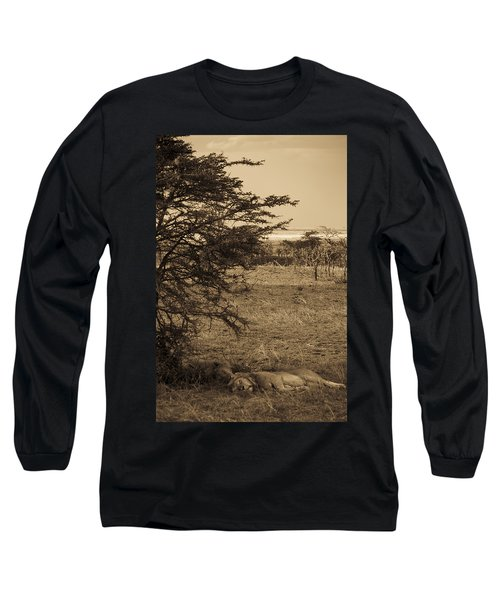 Male Lions Snoozing In Shade Long Sleeve T-Shirt by Darcy Michaelchuk