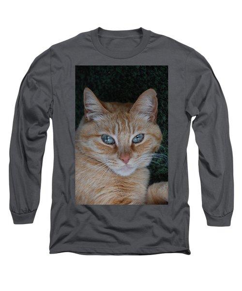 Fat Cats Of Ballard 5 Long Sleeve T-Shirt