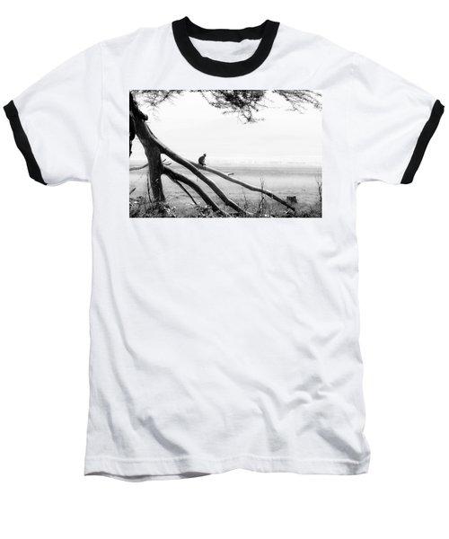Monkey Alone On A Branch Baseball T-Shirt by Darcy Michaelchuk