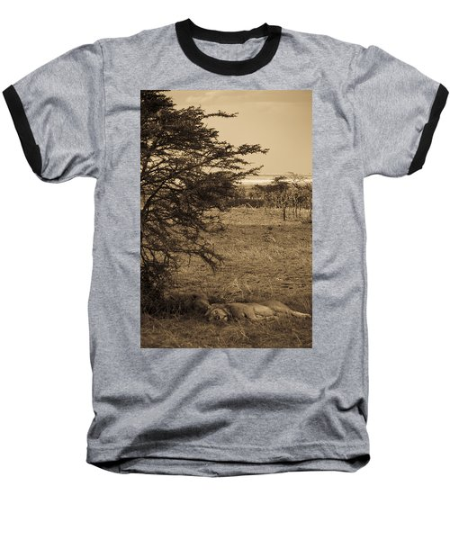 Male Lions Snoozing In Shade Baseball T-Shirt by Darcy Michaelchuk