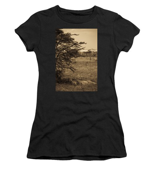 Male Lions Snoozing In Shade Women's T-Shirt (Junior Cut) by Darcy Michaelchuk