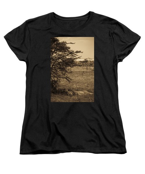 Male Lions Snoozing In Shade Women's T-Shirt (Standard Cut) by Darcy Michaelchuk