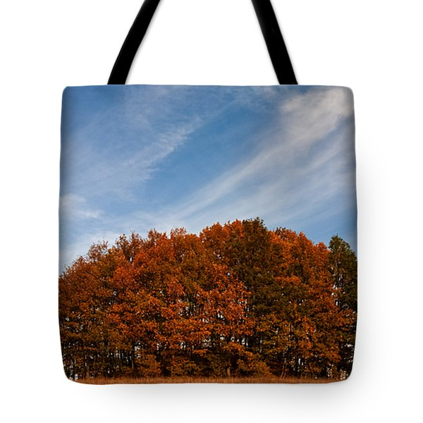 Compact Forest Tote Bag by Evgeni Dinev